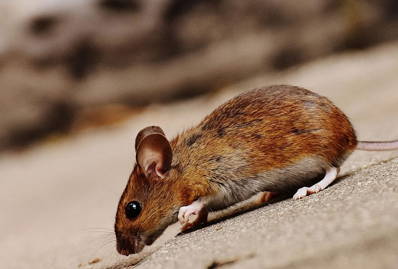 prevent mice getting into pontoon boat