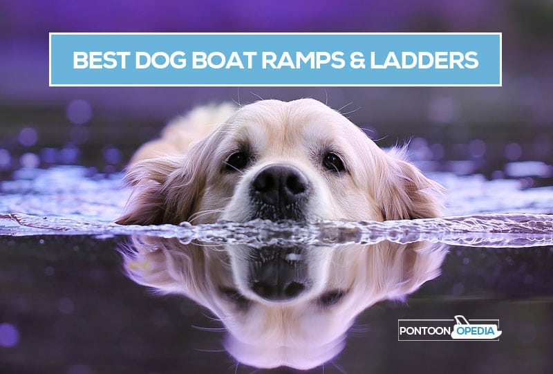 Best Dog Boat Ramps and Dog Ladders for Pontoon Boats