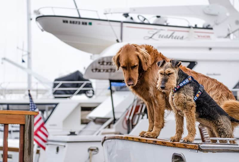 how to get a dog on a boat