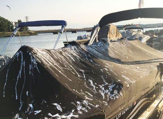 stop seagulls pooping