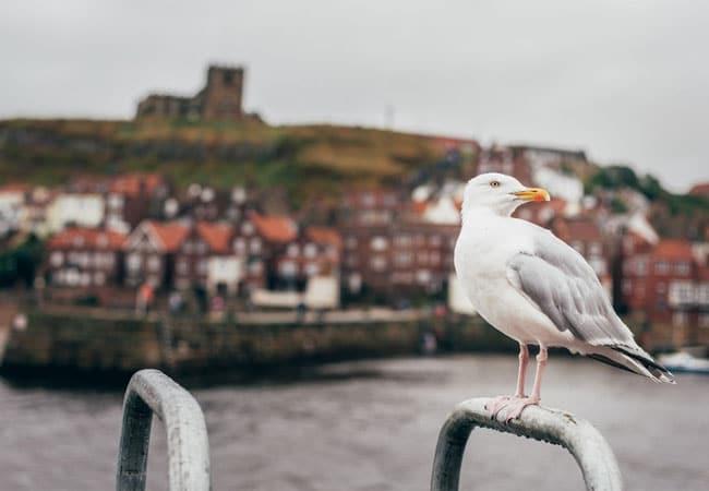 seagulls at a port