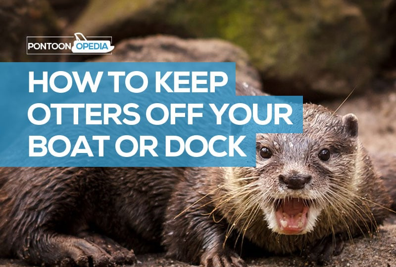 How to Keep Otters Off Your Boat, Dock, or Boathouse (11 Ways)