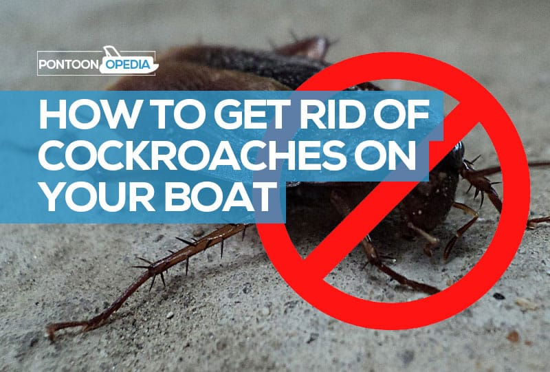 How to Get Rid of Cockroaches on a Boat