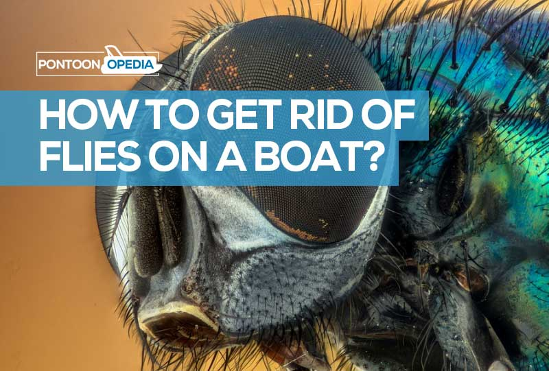 How to Get Rid of Flies On a Boat? + Some Preventative Methods
