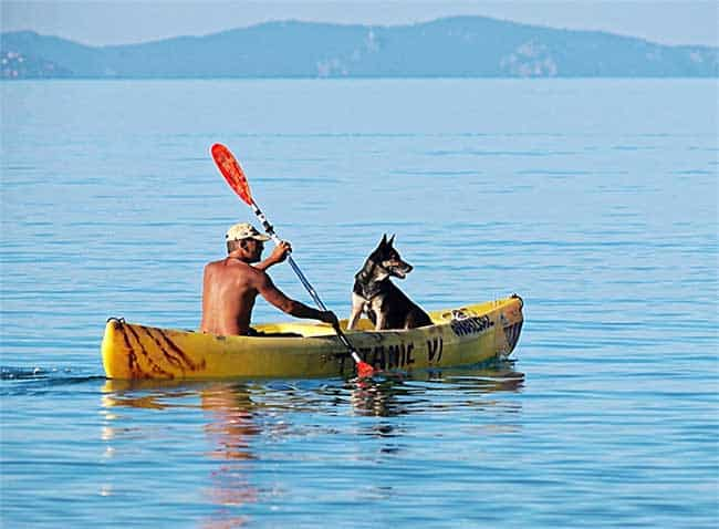 boating with dogs tips