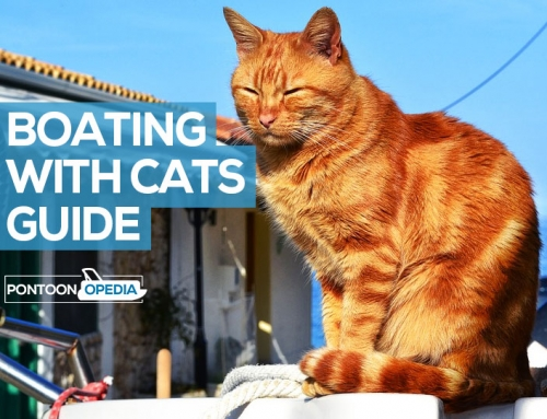 Boating with Cats Guide: Living Onboard, Seasickness, & Tips